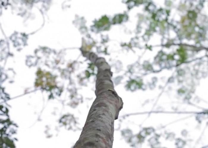 Твердость и стабильность дерева